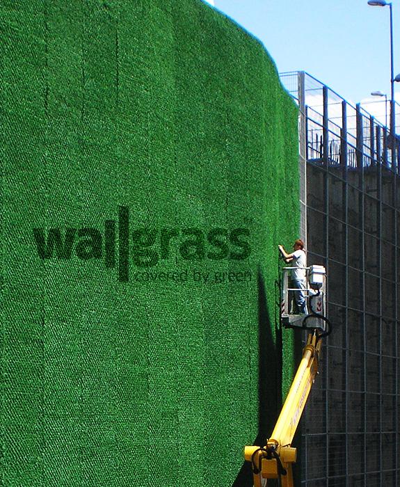Wallgrass