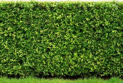 Garden Wall Application
