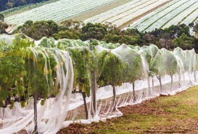 Nets for Garden Application